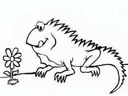 free iguana coloring page for kids new iguana coloring page to