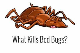 bed bugs uv light killing what kills bed bugs