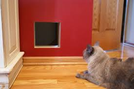 Exterior Cat Door Interior Cat Door For Walls Lets Your Favorite Pet Coming In And