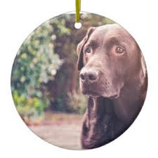 brown labrador retriever ornaments keepsake ornaments zazzle