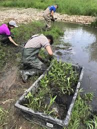 native wetland plants conservation halton on twitter