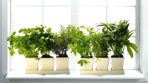 window planters indoor indoor window planter indoor window boxes indoor window plant ideas