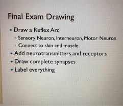 Motor Reflex Arc Final Exam Drawing Draw A Reflex Arc O Sensory Neu Chegg Com