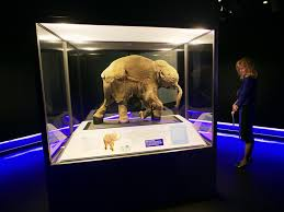 mammoth shift thinking vancouver island u0027s ice age history