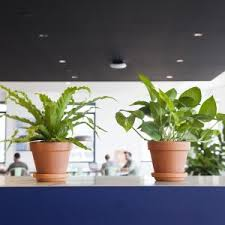 Best Plant For Office Desk Decorations Best 25 Desk Plant Ideas On Pinterest Plants For