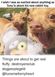 Tuna The Dog Meme - i wish i was as excited about anything as tuna is about his new