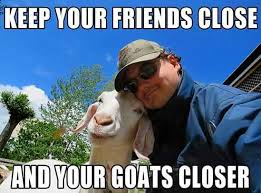 Funny Goat Memes - the 25 funniest moments in goat history gallery worldwideinterweb