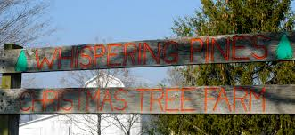 find the perfect tree at evans whispering pines christmas tree farm