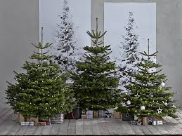 where to buy real trees lights decoration