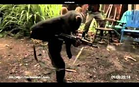 Flag With Ak 47 Monkey Shooting Ak 47 Between Soldiers In Africa Youtube