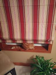 16 cats that are absolutely terrible at hide and seek