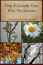 how to live in tune with the seasons farming my backyard