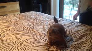 very angry prairie dog youtube