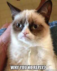 Why You Not Meme - why you no reply grumpy cat make a meme