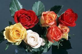 flowers 02 jpg 1488159 byte free flower pictures roses wallpoop