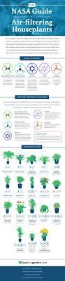 benefits of houseplants 5 health benefits of houseplants honest well