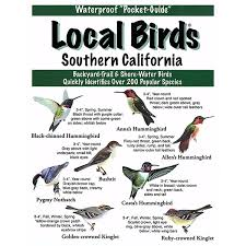 California Birds images Southern california local birds jpg