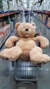 Meme Teddy Bear - bad teddy bear blank template imgflip