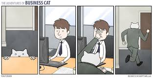 Business Cat Memes - deluxe 28 business cat memes wallpaper site wallpaper site