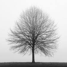 white tree black and white photography tree photography winter photography