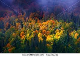 fall scene stock images royalty free images u0026 vectors shutterstock
