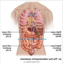Human Anatomy Torso Diagram Abdominal Cavity Diagram Anatomy Abdominal Cavity Diagram Human