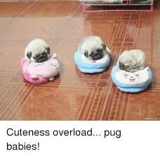 Cuteness Overload Meme - muare vrh cuteness overload pug babies cute meme on me me