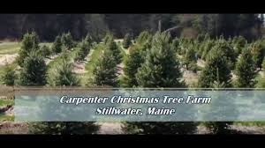 carpenter christmas tree farm stillwater maine youtube