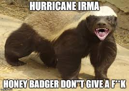 Meme Honey Badger - honey badger memes imgflip
