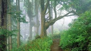 forests tree way beautiful fog path forest plant mist colorful