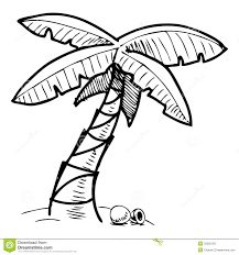 tropical palm tree sketch illustration royalty free stock image