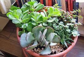 best low maintenance indoor house plants micro living
