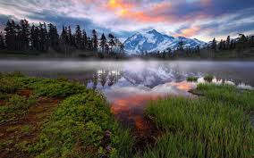 Wetland Resources Of Washington State by Earth Day The Nature Conservancy In Washington