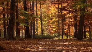 autumn forest trees sunset light colorful fall nature