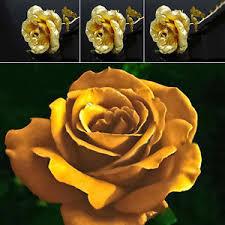 golden roses 150pc golden flower seeds golden growth flower