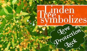acquaint yourself with what a linden tree symbolizes