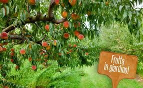 albero giardino alberi da frutto per giardini 5 piante per chi ha poco spazio leitv