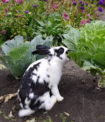 Rabbit Repellent For Gardens by The 5 Best Rabbit Repellents Reviews U0026 Ratings Jan 2018