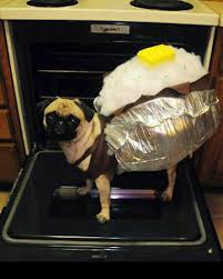 Boxer Puppy Halloween Costumes Baked Potato Diy Halloween Dog Costume Halloween Brit