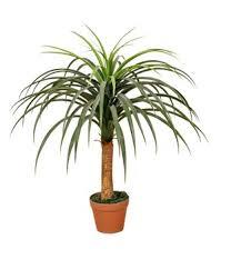 indoor types of evergreen ornamental trees artificial plants buy