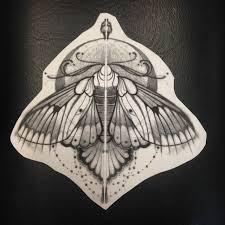 baroque moth idea by jef small best ideas gallery