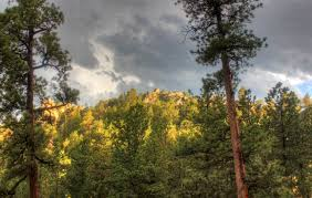 South Dakota forest images Free stock photo of forest at black hills in the black hills jpg