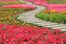 A Garden Of Flowers by Beautiful Flowers And Path In A Garden Stock Photo Picture And