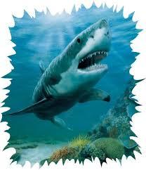 34 best harrison images on pinterest lightning sharks and lava