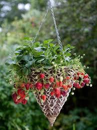 733 best home and garden images on pinterest gardening