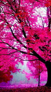 28 best pink tree images on blossom trees cherry