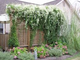 Trellis As Privacy Screen 114 Best Backyard Privacy Images On Pinterest Backyard Privacy