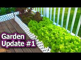 container garden update 1 vegetable gardening raised bed square