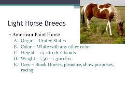breeds of horses mr chudej breeds of horses horses may be