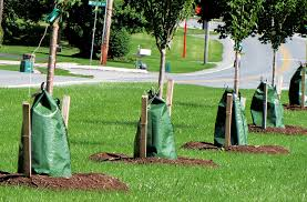 11 read about trees that tolerate city gibneyce